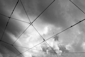 spiderwebs_simone_ladisa.JPG